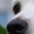 Profilbild von Silvia